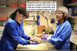 May's brain