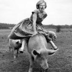 May's pig jump