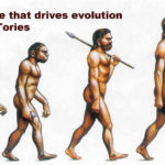 Boris evolution